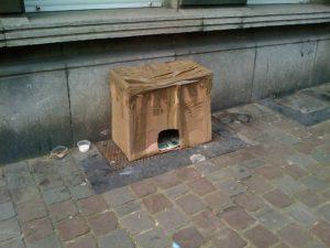 New cat on the block
